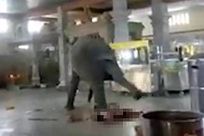 Разъяренный слон затоптал хозяина до смерти