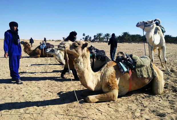В пустыню можно отправиться на верблюдах или на квадроцикле. Тем, кто хочет почувствовать Сахару всем сердцем, предлагают дальние экспедиции и ночевки в кемпинге.