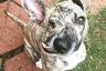 Ветеринар Даниелла Бойд забрала щенка по кличке Хлюп из приюта в пять месяцев. В детстве его сильно ударили по правой стороне лица, из-за чего он лишился глаза, но хозяйка называет его самым счастливым псом на Земле. «Он заставляет меня улыбаться даже в самые плохие дни», — написала она.