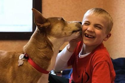 Шестилетний мальчик спас от смерти более тысячи собак