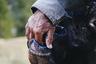 На снимке житель горной деревушки Лаутербруннен кормит с руки домашнего быка.