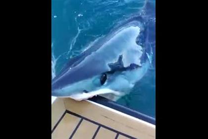 Крупная акула вцепилась зубами в лодку