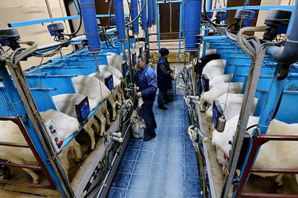 Министр ЕЭК потребовал отменить запрет наввоз в Российскую Федерацию белорусской «молочки»