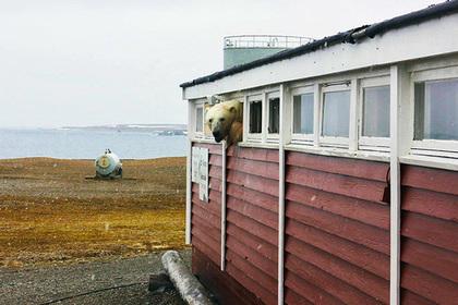 Объевшийся медведь-сладкоежка застрял вокне отеля вНорвегии