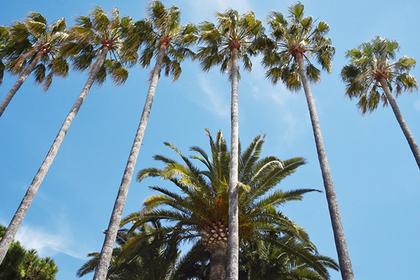 На пляже у Енисея появятся живые пальмы