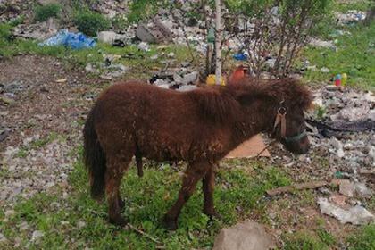 В Башкирии пони выбросили на помойку