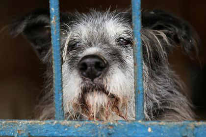 Массовое убийство попавших в многодетную семью собак обнаружили в Кузбассе