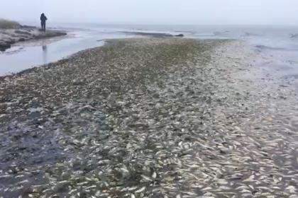 Экологи сообщили о массовой гибели сельди у берегов Сахалина
