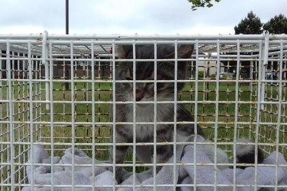 Котенок проплыл тысячи морских миль в трюме корабля и был усыплен