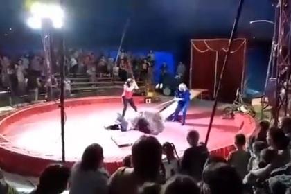 Медведь напал на дрессировщика во время представления под Волгоградом