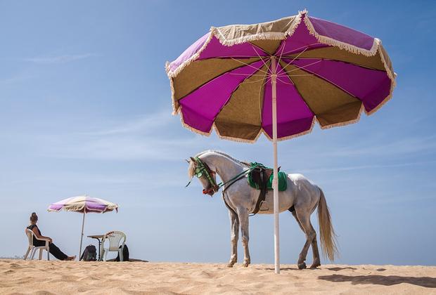 «Касабланка не кино» — визуальное послание тем, кто видел знаменитый марокканский город лишь на картинке. Яссин Алаул Исмаили передает реальную уличную жизнь Касабланки и выделяет наиболее яркие и интересные моменты, которые мог отметить лишь уроженец этих мест.