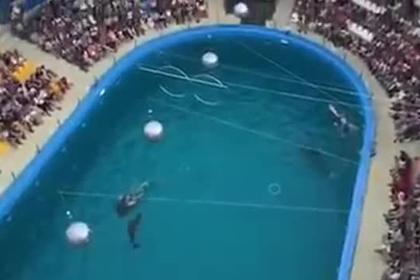 Самка дельфина родила прямо на глазах у публики