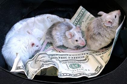 Мыши сгрызли млн рупий вбанкомате вИндии