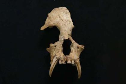 В китайской гробнице нашли вымершее существо