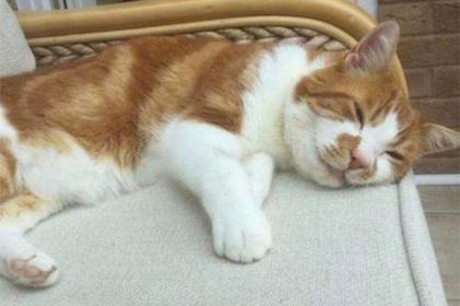 Кот ушел гулять и вернулся спустя десять лет