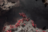Последние два года Роберт Чжао Рендуи посвятил изучению цепочки последствий, вызванных присутствием человека на острове Рождества. Фотографии, научные исследования, путевые записки и документальные факты в его произведениях переплетаются с элементами выдуманного мира.