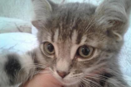 Россиянка показала кошку с пятью ушами