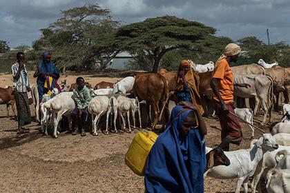Бои пастухов и фермеров унесли жизни сотен людей
