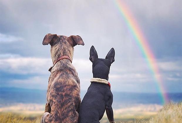 Дворняжка Мохо и карликовый пинчер Рана знают, что никогда не стоит отчаиваться, ведь даже из-за хмурых туч может появиться яркая радуга.