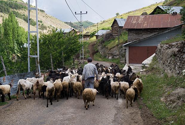 Деревенский быт в горах Турции ничем не отличается от жизни в любой из республик Северного Кавказа. Разница лишь в том, что турки ощутимо богаче, а их деревни— куда более цивилизованные. Свет, газ, хорошая, пусть и грунтовая дорога— тут обычное дело.