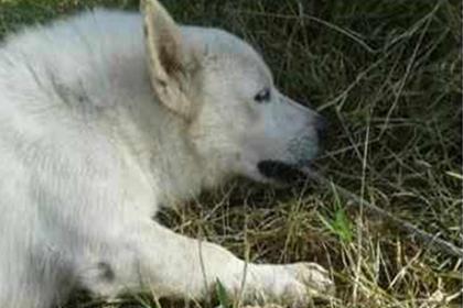 Храбрый пес пожертвовал жизнью ради спасения хозяина