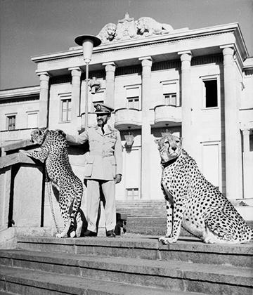 Император с ручными гепардами в своем дворце в Аддис-Абебе. В повседневной жизни Хайле Селассие предпочитал военную форму.