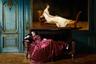 Патриция Бурра — не только фотограф, но и профессиональный художник. Именно поэтому многие ее снимки похожи на живописные полотна. Проект «Донна Лия» был снят в стенах пустующего дома в голландском Роттердаме. Обстановка, полная мистики, таящая в себе секреты прожитых в этих стенах жизней, вдохновила художницу на кадры, передающие мечты и сны. Этот портрет стал попыткой показать потерянную в своих грезах героиню.