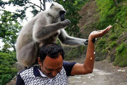 В индийском штате животным дали права
