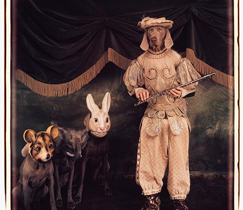 Уэгман уверен, что веймаранеры — прекрасные модели, но предупреждает, что как питомцы они довольно капризны. Во время съемок справиться с питомцами фотографу помогает ассистент, но в остальное время за четырьмя собаками он ухаживает самостоятельно.