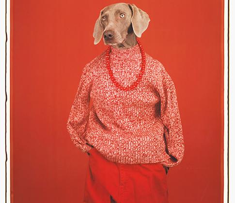 Уильям Уэгман прославился благодаря фотографиям собак. Первой моделью художника стал его питомец Ман Рэй породы веймаранер. Этот творческий тандем хозяина и пса стал знаменит на весь мир. Когда любимец умер, Уэгман чрезвычайно тяжело переживал потерю. Лишь спустя несколько лет он решился завести новую четвероногую «музу».