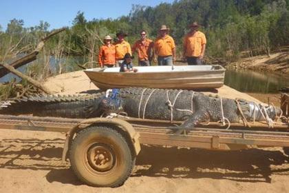 ВАвстралии словили 600-килограммового крокодила, охота заним велась 10 лет