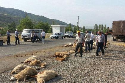 Дорогая авария: Ауди убила 57 овец иранила пастуха