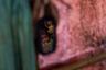 В конце августа 2017-го М. была дома с детьми, когда услышала стрельбу и крики на улице, а затем увидела, как солдаты поджигают соседние дома. Две дочери успели убежать, а ее саму с двухлетним сыном на руках солдаты застали в дверях. Один из них схватил плачущего мальчика и задушил его, а затем ее втолкнули в дом, где избили и изнасиловали. На груди у нее остались шрамы от укусов одного из них. <br><br> Муж смог найти ее лишь через два дня, после чего донес ее до границы с Бангладеш. Женщина не призналась ему сразу, что ее изнасиловали, однако через четыре месяца правду скрывать стало сложно: она была беременна и чувствовала себя плохо.