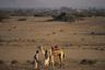 В 1846 году из-за межклановых конфликтов кочевников Аравийского полуострова в Эритрею переселилось племя Рашайда. Сейчас представители этого арабоязычного народа являются последними кочевниками Эритреи.