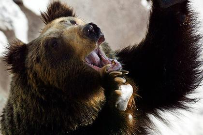 Японец подрался с медведем и обратил его в бегство