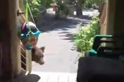 Американка прикрикнула на медведя и прогнала его