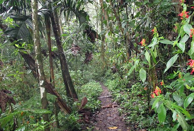 Лес под Боготой
