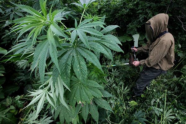 Бирже марихуаны семена марихуаны беларусь