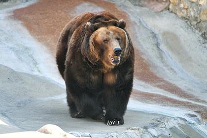 Российские медведи станут стратегическим ресурсом