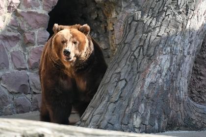 На Камчатке медведи раскопали могилы на кладбище