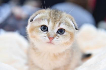 Тысячи россиян потребовали наказать зарубившую топором котенка девушку