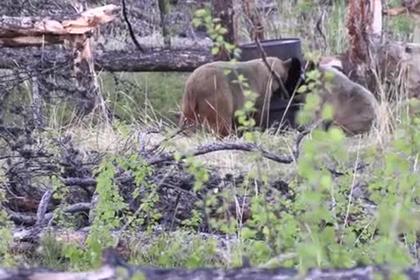 Охотники попытались убить медвежонка и еле спаслись от его матери