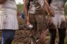 Главное условие болотного футбола— получить удовольствие. Об этом мы уже писали.