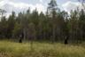 Туалеты до финских болот не доехали. Приходится выживать в дикой природе.