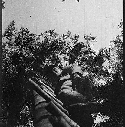 Артиллерист, взбирающийся на дерево.