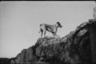 Собака на боевых позициях французской артиллерии.