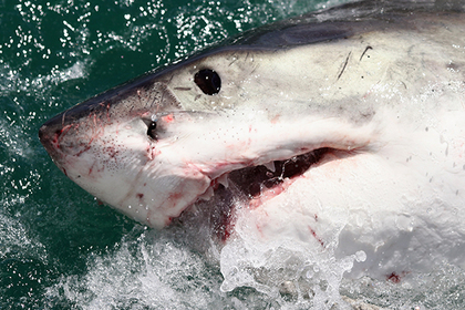 Акула убила туриста в Египте