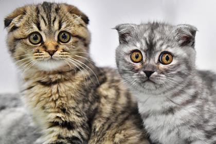 Названы самые популярные кошки у россиян