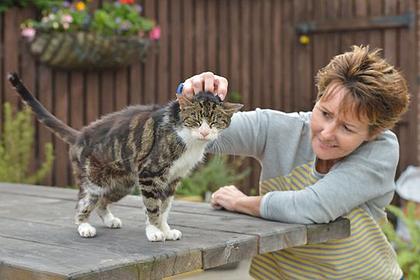 Престарелый кот вернулся домой спустя 13 лет скитаний