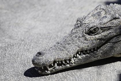 Обнаглевшие крокодилы выгнали жителей деревень из домов